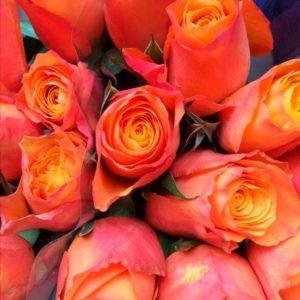 Сад Марьинка Саженцы розы Конфиденшиал