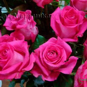 Сад Марьинка саженцы роз Топаз